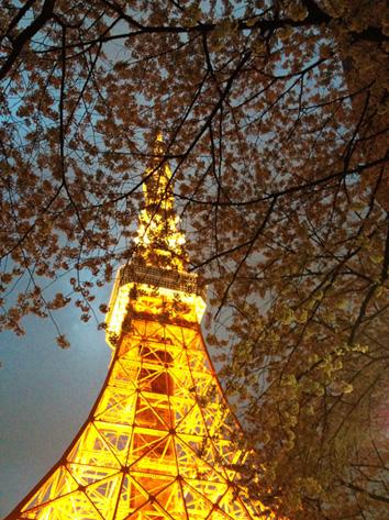 東京タワー 桜