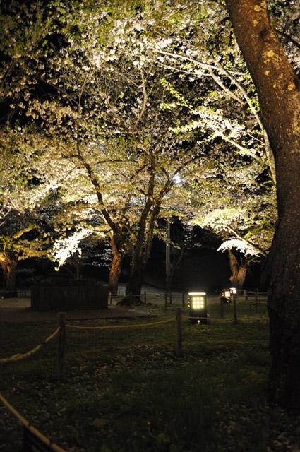 鶴ヶ城 桜