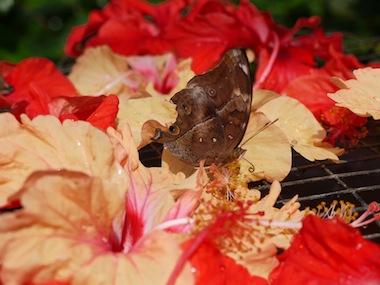 butterflyP3.jpg