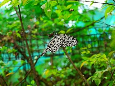 butterflyP4.jpg