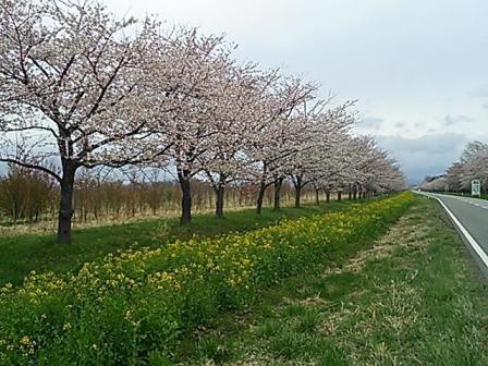 2013.05.04 菜の花ロード