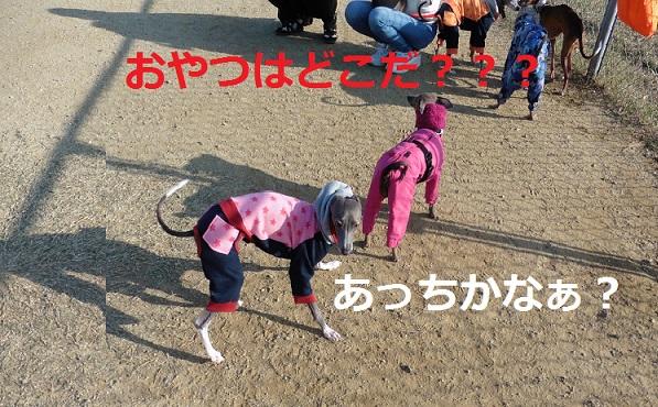 おやつ???(゜゜*)ドコ(。。*)(*。。)ドコ(*゜゜)???