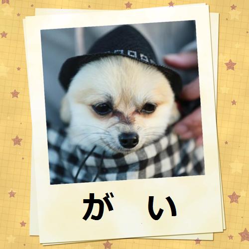 可愛いガイ(*^・^*)チュッ♪