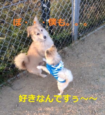 ・・・・・・・・・((* ・・*)(*・・* ) スキスキィ