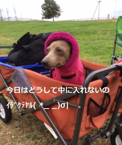 LALAちゃんイジケテヤル( *_ _)σ|