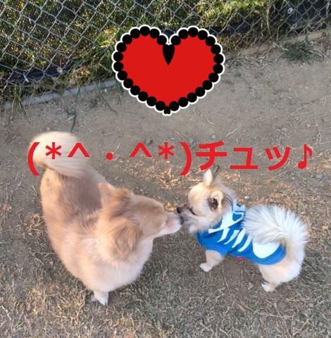 (* ^)(^ *)チュッ♪