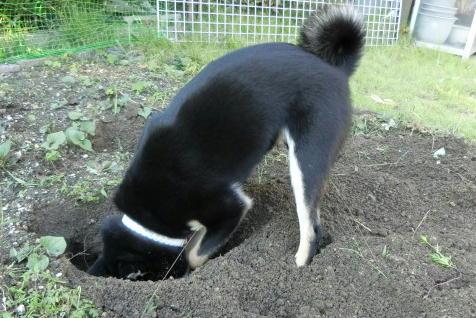 穴掘り 2