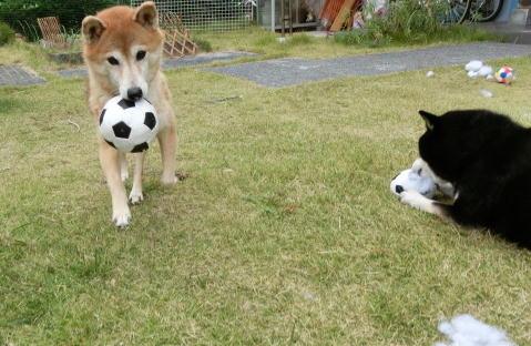 ボールはこび