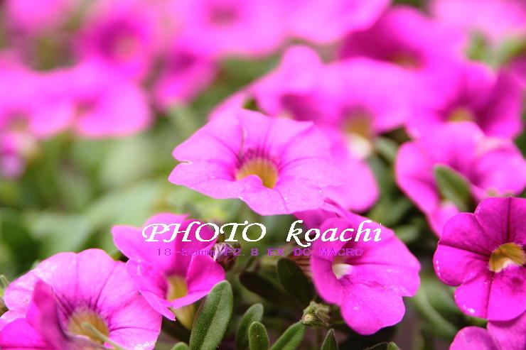 20120521120610-125044-IMG_7784_R.jpg