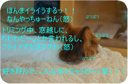 DSC_9784.png