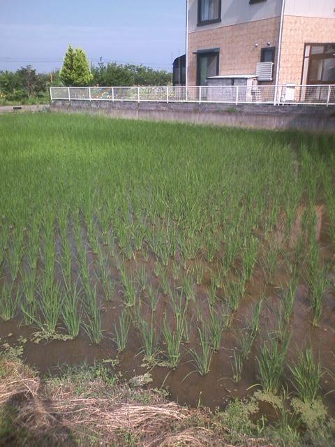 20120711omukaisan.jpg