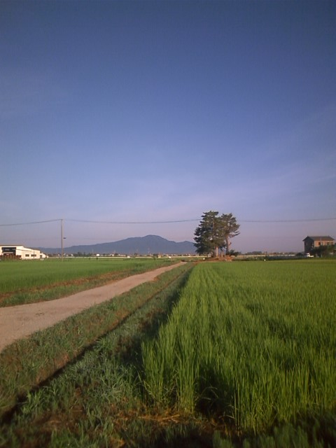 20120804natunoasa.jpg