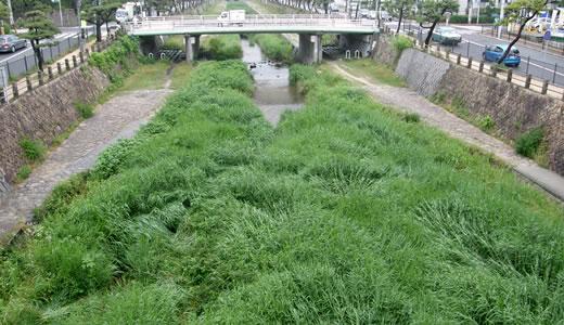 大阪梅田地下街ウォーク 番外編-4