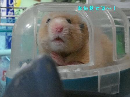 また見てる~!