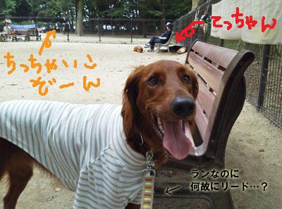 NEC_2330.jpg