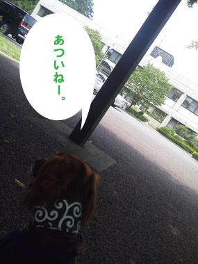 NEC_2342.jpg