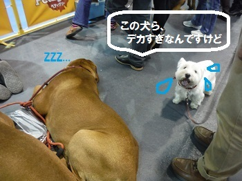 DSCF10731blog.jpg