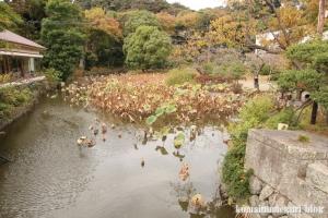 鶴岡八幡宮(鎌倉市雪ノ下)60