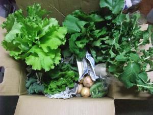 ゆうき野菜