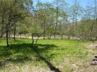 リュウキンカが咲いている 『西の尾瀬沼』と言われ満朝系植物が見られる。