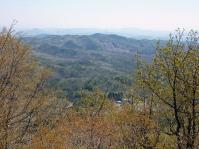 山頂の新芽大木が多い 落葉から木を考えたり・・・
