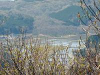 展望台 からの眺め 阿哲地区は早くも田植えの季節、水田が見える。