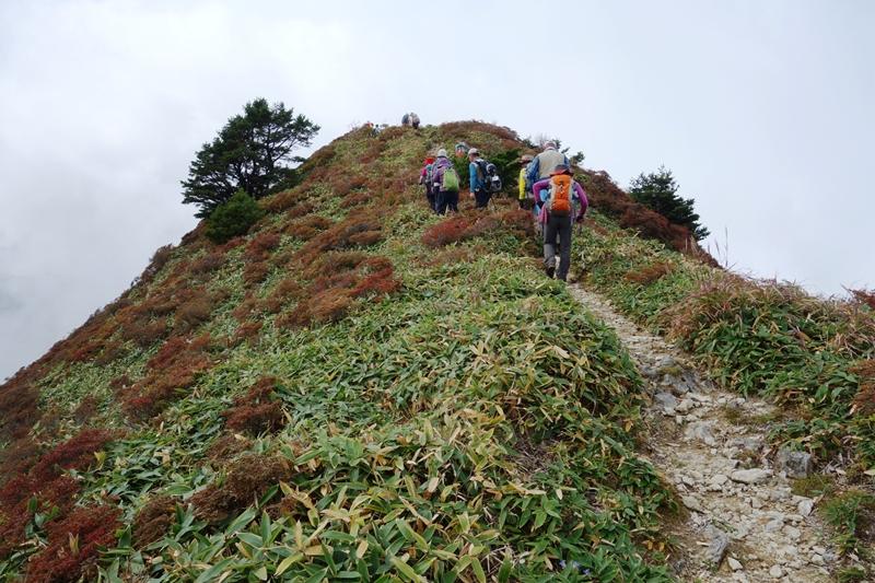 13:33 笹尾根、コメツツジの紅葉の中石鎚山山頂をめざして歩く
