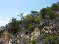 車道歩きの下山 貝殻山の岩と低木