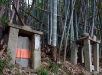 10:30 登山道は竹林の道