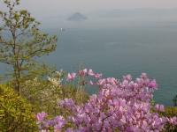 山のコースは絶景 大槌島、船の航行を眺めながら歩く