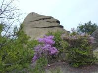 矢出山 山頂 稜線のニコニコ岩が出迎えてくれる。