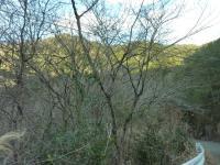 瀬戸の雑木林