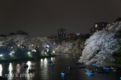 千鳥ヶ淵 桜