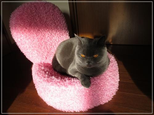 姫の椅子1