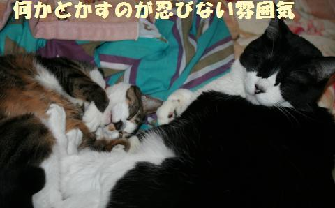 031_convert_20121231210026.jpg