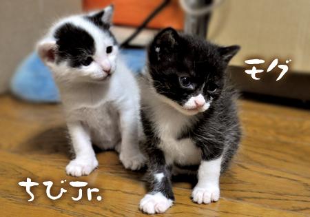 Jrとモグ