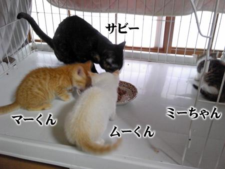 仔猫4匹?