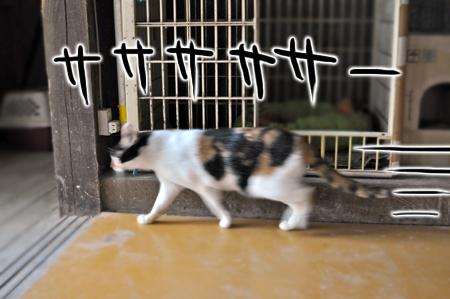 逃げる三毛2
