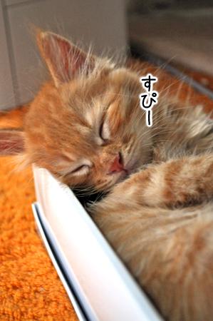 寝るバサル