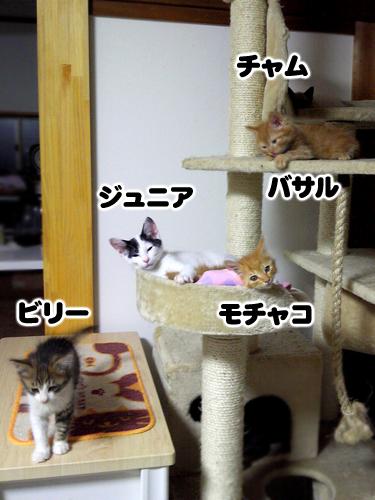 仔猫タワー