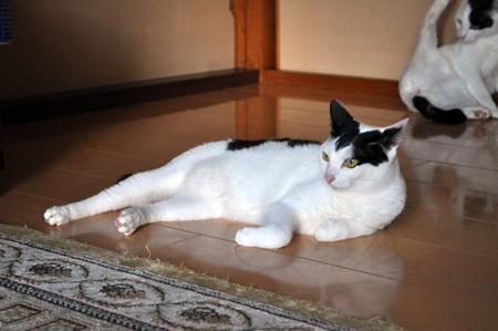おじさんちの猫④
