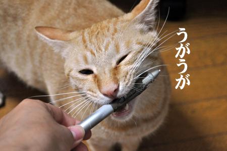 ペン噛むトラ