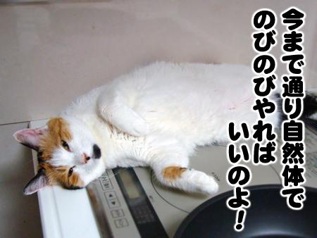 まめちゃ2012.8.15