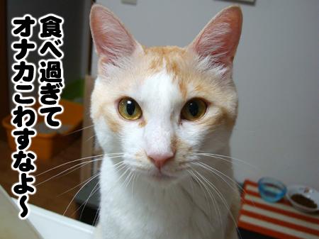 いもちゃ2012.8.15