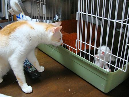 仔猫といもちゃ2012.8.18
