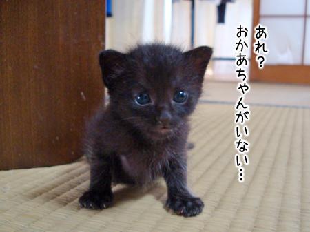 仔猫ファイブ2012.8.29①