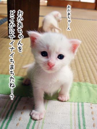 仔猫ファイブ2012.8.29②