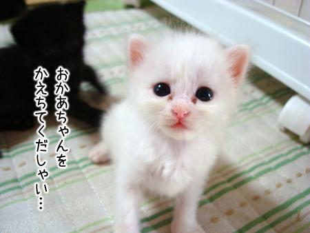 仔猫ファイブ2012.8.29③