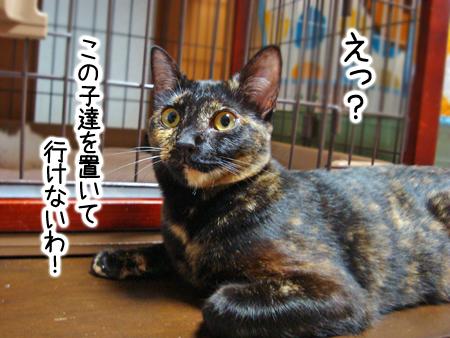 サビかぁさん2012.9.3