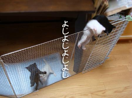 仔猫ファイブ2012.9.4①